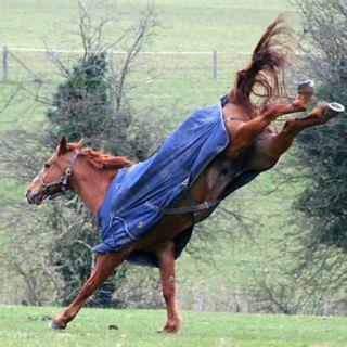 paardendekens wassen paardendeken wasserijen