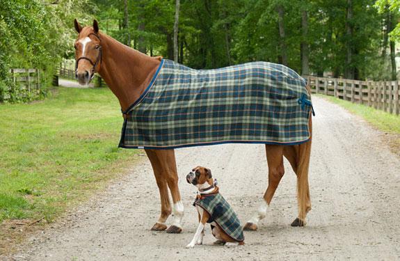 paardendekens hondendekens kleden